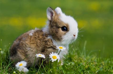 cute nice pics   site suesse tiere niedliche