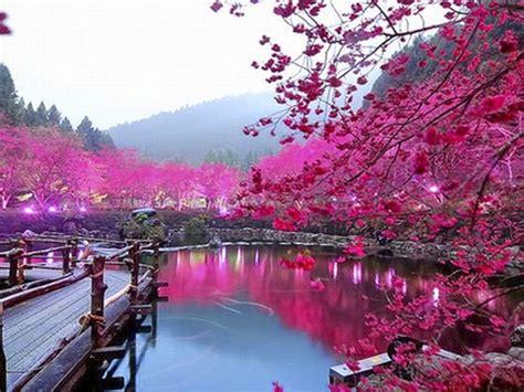pink color lake trees bridge hd wallpaper