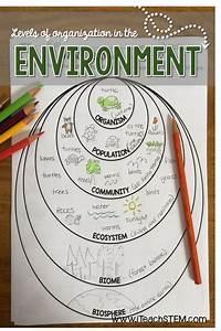 Stem  Ecological Organization Formative Assessments