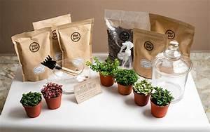 Diy Terrarium Premium Kit By Floral Garage
