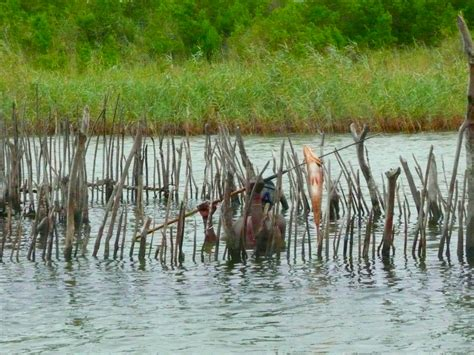 Airboat Afrika by Airboat Africa Hunters For Luck