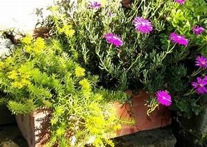 Winterharte Blumen Für Kübel : winterharte stauden als topf und k belpflanzen funkien sedum heuchera saxifraga ~ A.2002-acura-tl-radio.info Haus und Dekorationen