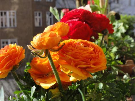 abbellire il terrazzo come abbellire il terrazzo con i fiori pagina 2 di 2