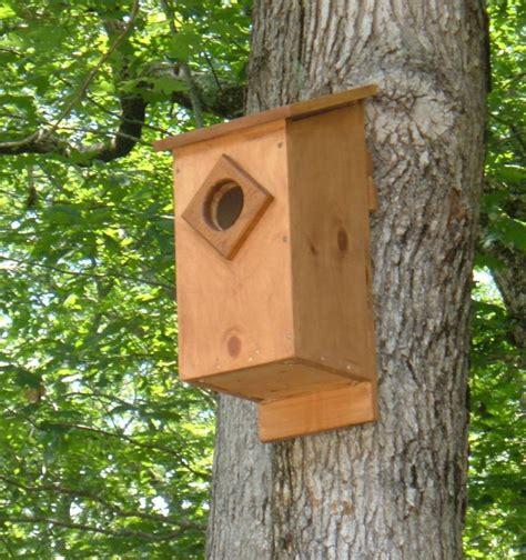 screech owl house plans   build  screech owl box feltmagnet