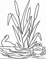 Pond Worksheet Coloring Drawing Preschool Worksheets Nature Frog Animals Duck Pages Scene Kindergarten Education Preschoolers Simple Activities Easy Printable Pre sketch template