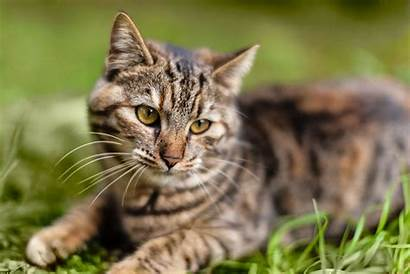 Sneezing Cat Eye Iris Why Cats Definition