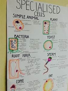 The 25  Best Science Notes Ideas On Pinterest