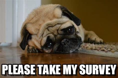 Sad Pug Meme Take My Survey Sad Pug Meme On Memegen