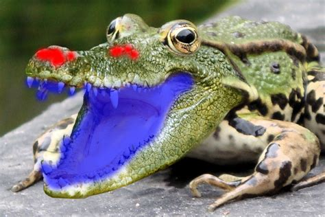 what color are crocodiles tip combine a crocodile and a frog in photoshop