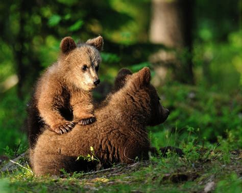 6 Of The Cutest European Animals