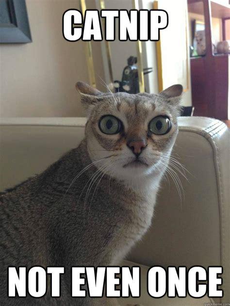 Not Even Once Meme - catnip not even once meme image memes at relatably com