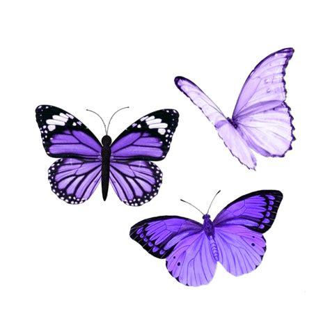 butterfly butterflies purple aesthetic tumblr overlay