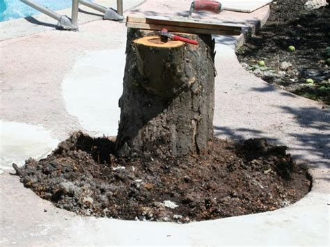 create  tree stump table  tos diy
