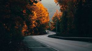 Road, Trees, Background, Hd, Image