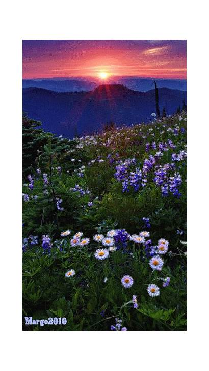 Nature Amazing Flower Gifs Sunset Places Night