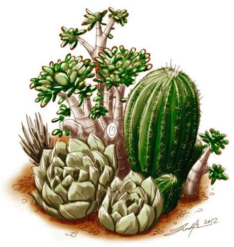 Succulent Cactus Sketch