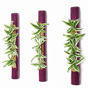 Pflanzen An Der Wand : 3er set tube 65 violett pflanzen an der wand ~ Markanthonyermac.com Haus und Dekorationen