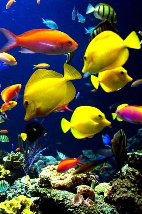 images   types  fish  pinterest
