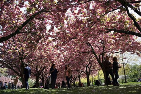 botanical garden cherry blossom greenery the world s most beautiful botanic