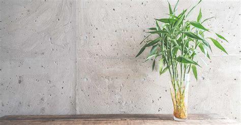 plante de bureau feng shui 6 plantes qui attirent les énergies positives selon le