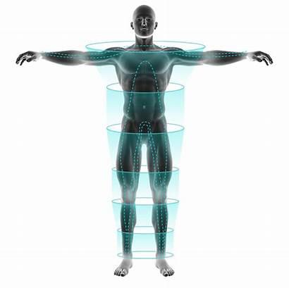 Fitness Scan Analysis Evolt Fat Mass Bodyscan