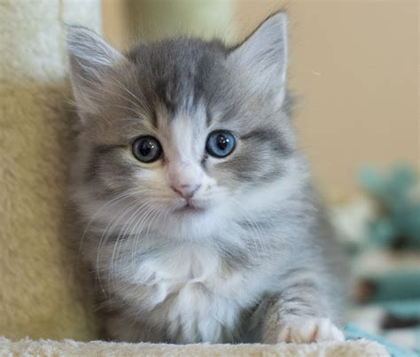 Animal Tails: Kitten season is here, foster homes needed