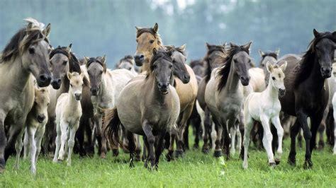 horse herd animals goodwp foals horses animal stallions wild pony mares desktop hd