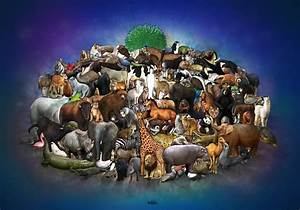Group Of Different Animals Together