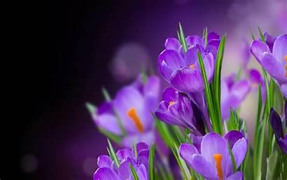 Purple Flower Wallpapers Flowers