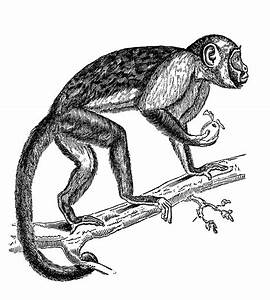 Hanging Monkey Clipart - Cliparts.co