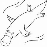 Wombat Stew Ornitorrinco Colorir Desenhos Platypus Outline Drawing Coloring Duck Clipart Billed Drawings Aboriginal Australian Animals Animal Dot Templates Colouring sketch template