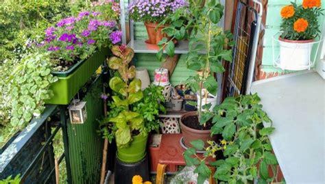 Ideja: nosargā balkona augus no izkalšanas ar agroplēvi ...