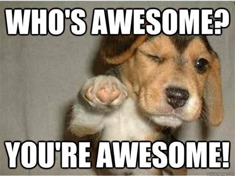 Beagle Memes - beagle meme google search haha pinterest beagle meme and animal