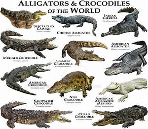 Alligators and Crocodiles of the World by rogerdhall on ...