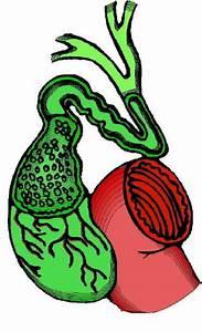 Гипертония желчный пузырь