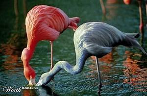 Real Purple Flamingos