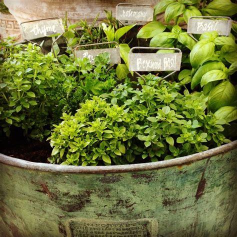 herb container garden container herb garden women s ministry pinterest