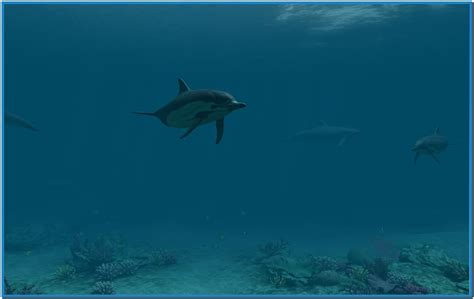 Dolphins 3d Screensaver And Animated Wallpaper - dolphins 3d screensaver and animated wallpaper free