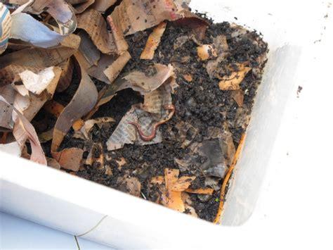 worms indoor compost bin ingridscienceca