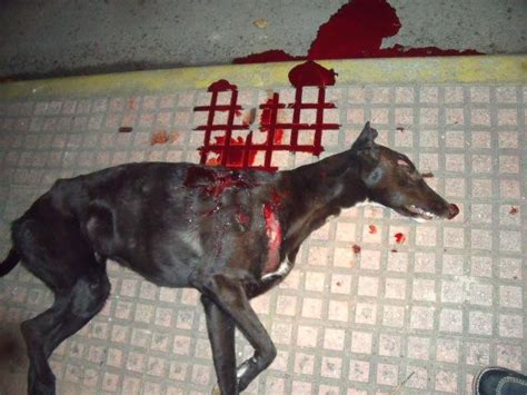 hunting dogs spain esdaw