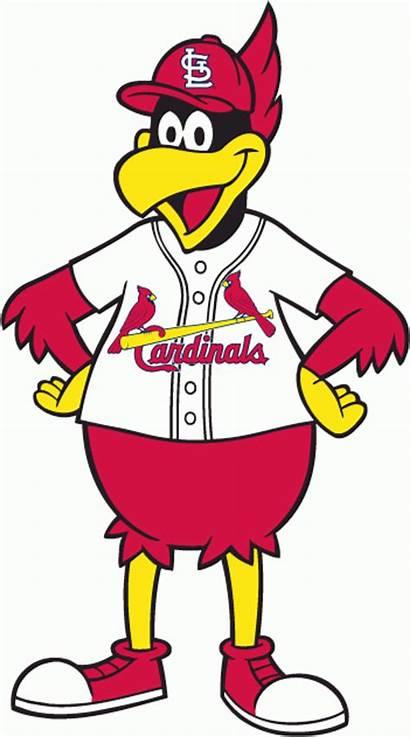 Cardinals Louis St Baseball Cardinal Logos 1980