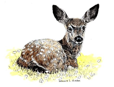 draw bambi    ink  art lessons