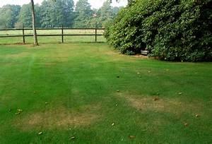 Braune Stellen Im Rasen : ursachen f r gelbe flecken im rasen wir sind im garten ~ Lizthompson.info Haus und Dekorationen
