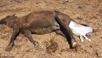 Animals Giving Birth