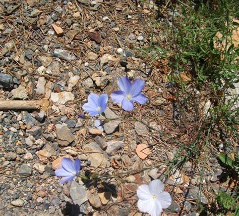 Photos De Jardin Botanique De Sierra Nevada  Galerie Photos