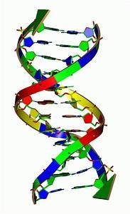 U2018quadruple Helix U2019 Dna Seen In Human Cells     Can Good
