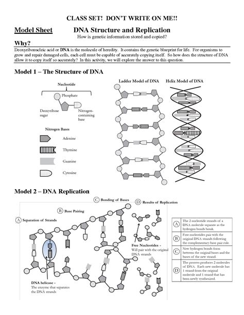 14 best images of high school dna structure worksheet
