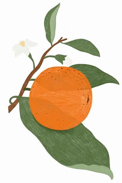 Orange Transparent Doodle Drawn Element Resource Bg