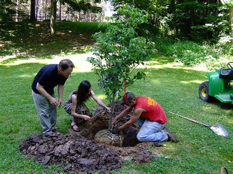caring for trees encouraging volunteers to care for trees deeproot blog