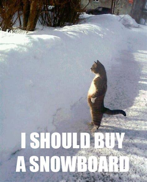 I Should Buy Meme - image 507704 i should buy a boat cat know your meme